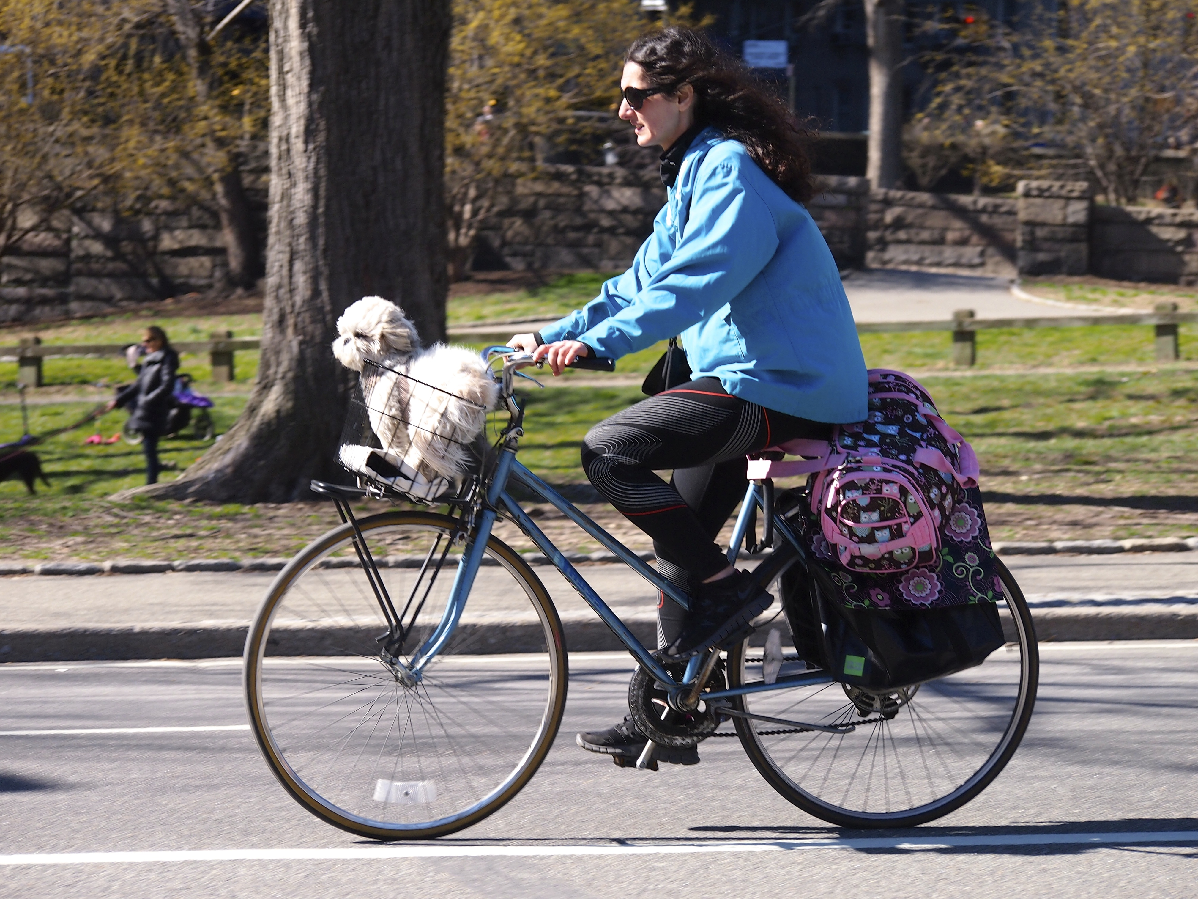 The History Of Dogs In Bike Baskets Dogs And Bikes