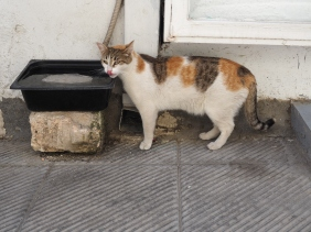 A cat in Athens.
