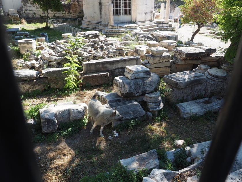 A dog in the Roman Marketplace, Athens. He was chasing a cat that was too quick for the camera.