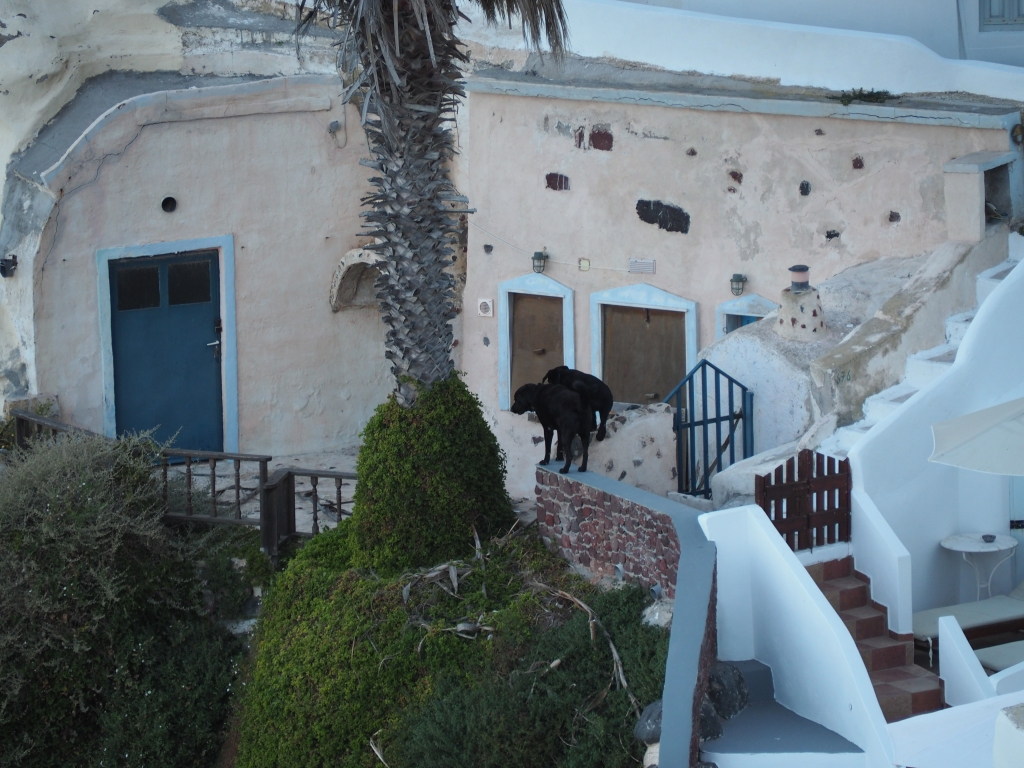 Two black dogs in Santorini. I watched them climb up and down the steep slopes and walk the narrow walls.